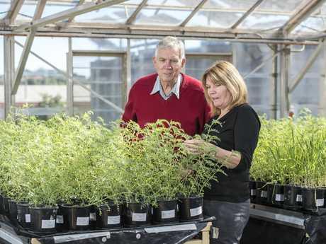 USQ's crop health research