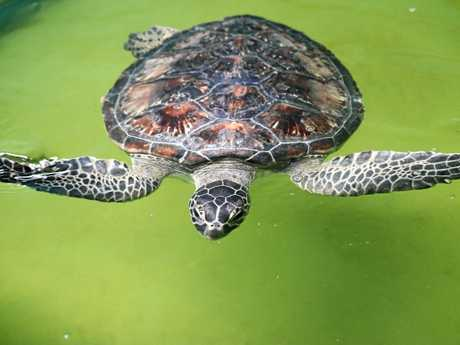 TURTLE RECOVERY: Will Smith is set to taste freedom.
