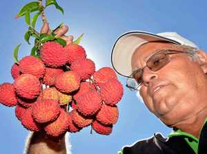 Mackay monster lychees ap-peel to festive fruit lovers