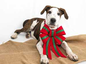Don't forget your furry family members this Christmas