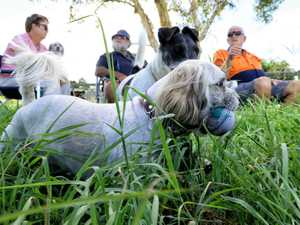 Residents lobby council for new off-leash dog area
