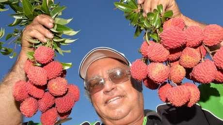 Brian Camilleri with the giant lychees that can grow four times the size of regular ones.
