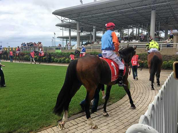 WINNER: Race horse Kingaroy at Sunshine Coast Turf Club on Sunday.