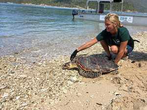 Turtle rescue nurses Cooper back to health