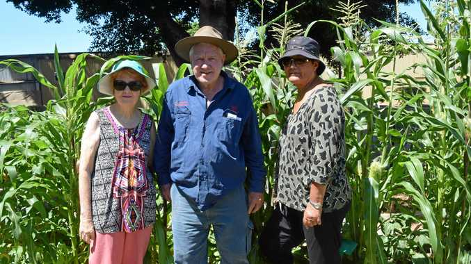 GARDEN CONTRIBUTORS: Ruth Lindsay, George Hartfiel and Maraea Rapira during their weekly meet.
