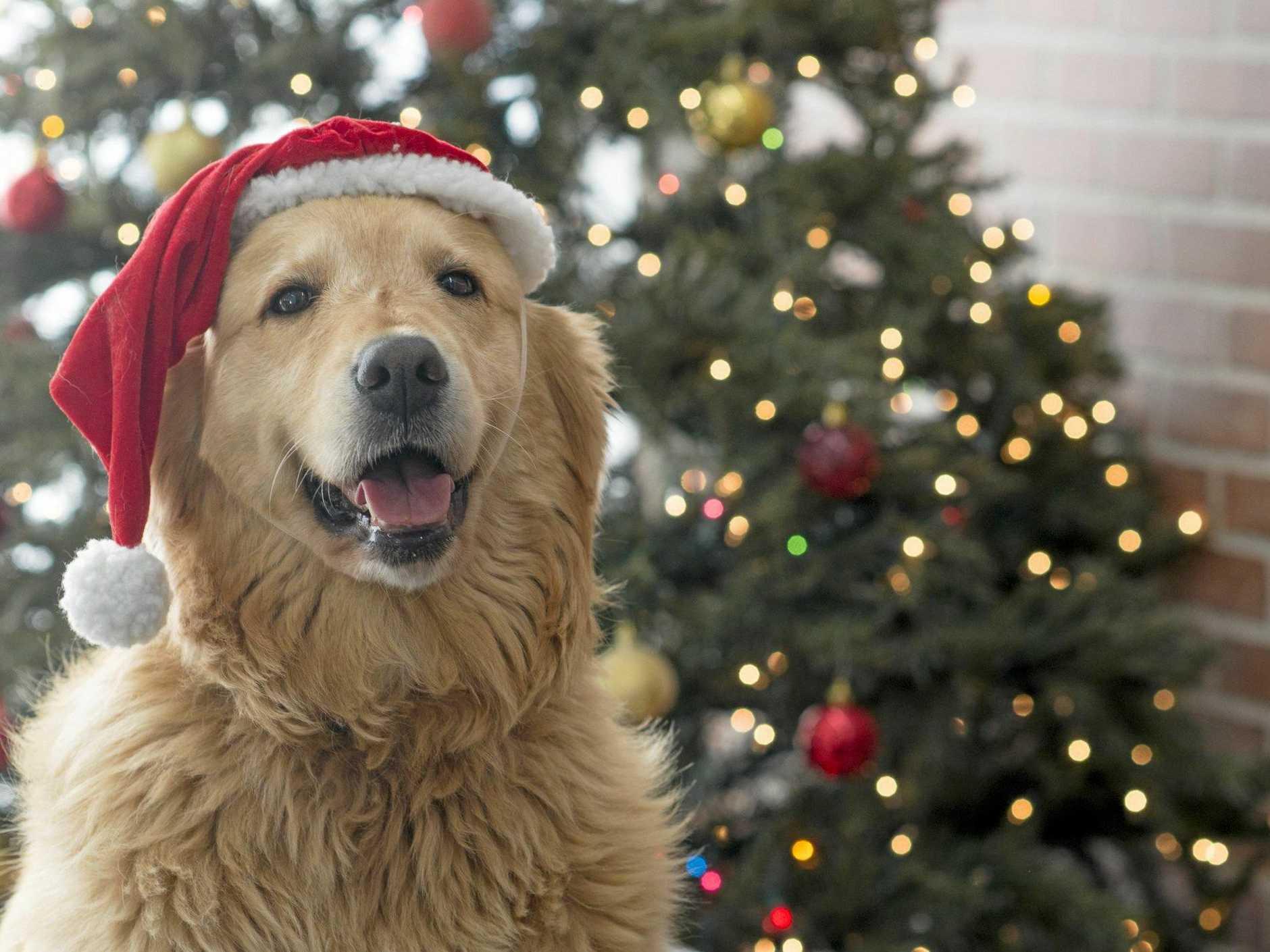 Free Santa photos at Eli Waters Shopping Centre.