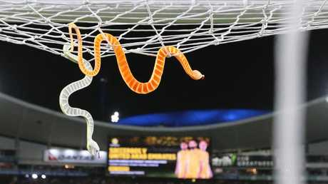 Rubber snakes were thrown during last season's Sydney Derby.