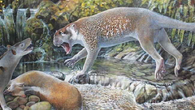 Artist's impression of newly discovered Australian marsupial lion Wakaleo schouteni Illustration by Peter Schouten.Source:Supplied