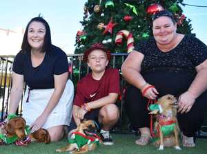 Dog winners at the Casino Christmas Party,