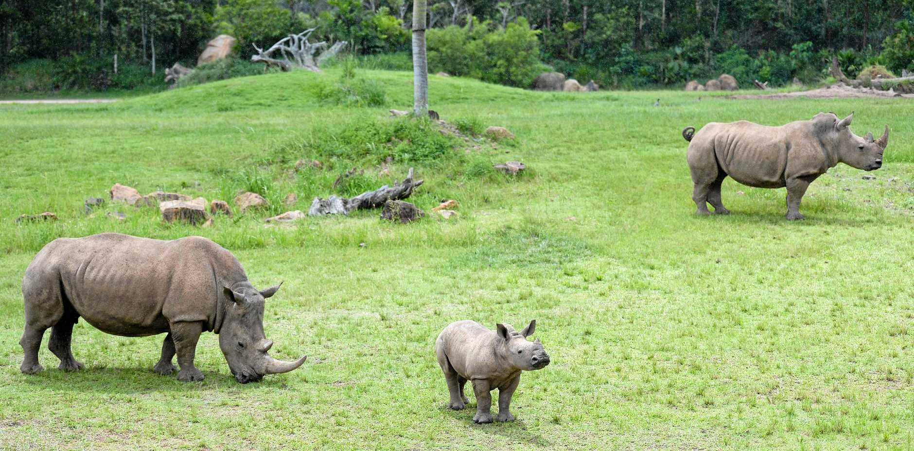 Australia Zoo's wildlife were safe during the storm which caused major damage to the facility.