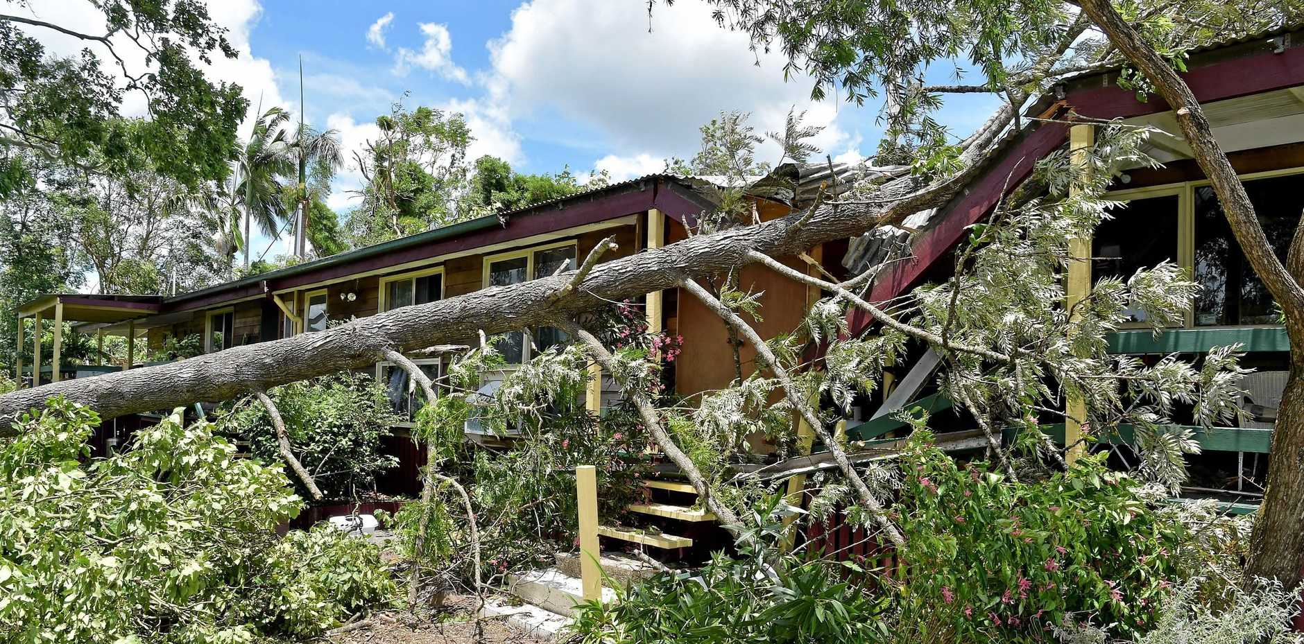 Residents in the Beerwah area clean up after a powerful storm uprooted trees.Brad Borhan's home was damaged after a tree crashed onto the roof.