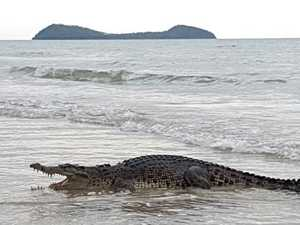 Crocodile snapped in water off popular Qld swim spot