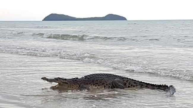 A crocodile walked out of the water at Kewarra Beach at about 6pm on Friday, sitting just metres away from locals and tourists. PICTURE: KAREN BRADTBERG