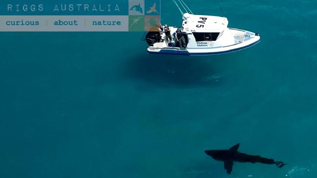Film maker Dave Riggs captured footage of the shark in WA. Image: Facebook