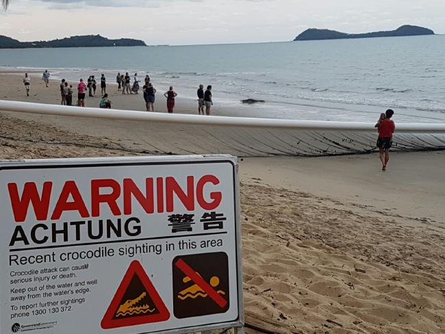 A crocodile walked out of the water at Kewarra Beach on Friday, sitting just metres away from locals and tourists. PICTURE: Karen Bradtberg