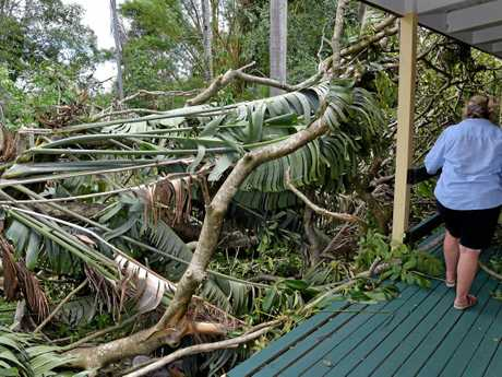 Residents in the Beerwah area clean up after a powerful storm uprooted trees.Sue-Ellen Borhan surveys the damage to her property.