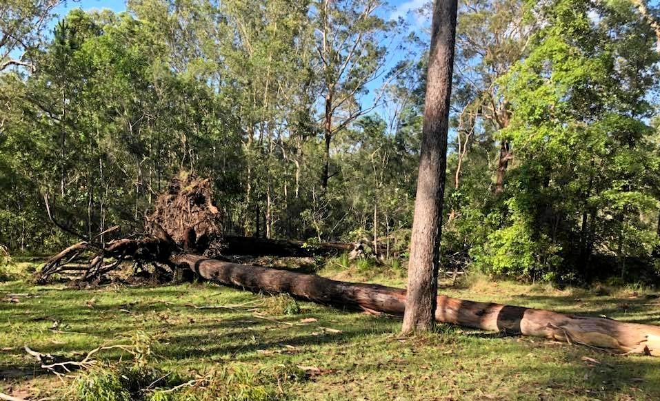 DEVASTATION: Parts of the Coast have been torn to pieces after a wild storm ripped through several suburbs at the weekend.