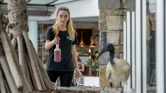 Greek Street Grill employee Hannah Ingram, spraying away ibis at the restaurant in Surfers Paradise. Picture: Jerad Williams