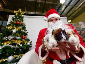 Paws for a free fun photo with Santa