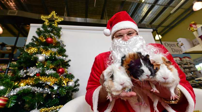 TOO CUTE: Dress your pet in their best and head to Noosa Fair Shopping Centre for a free photo with Santa paws.