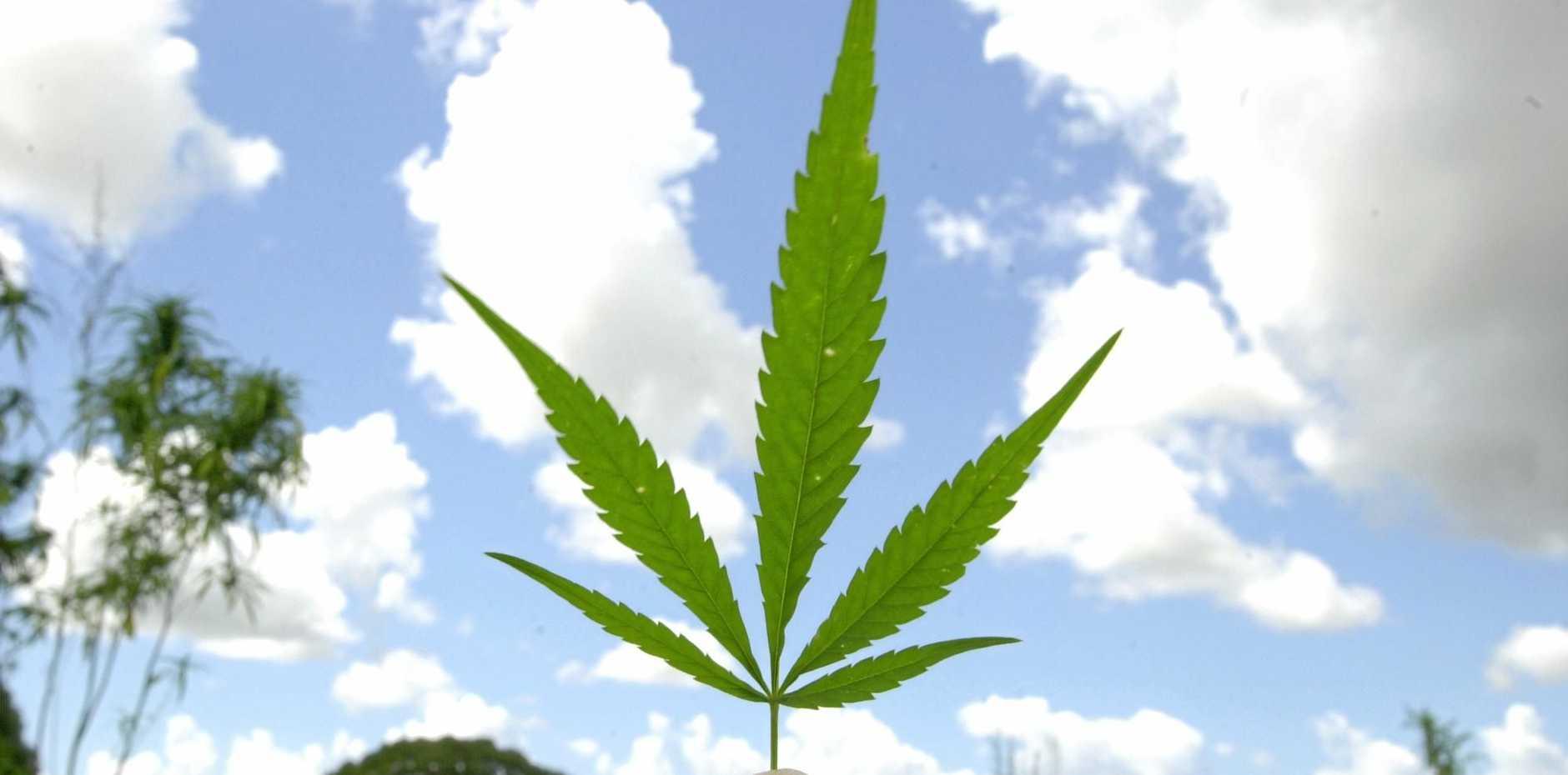 PUF Ventures Australia has announced plans for a major medicinal cannabis research partnership.