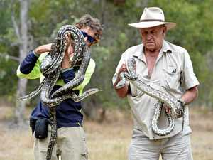 PHOTOS: Snakes of the Fraser Coast, what to watch out for
