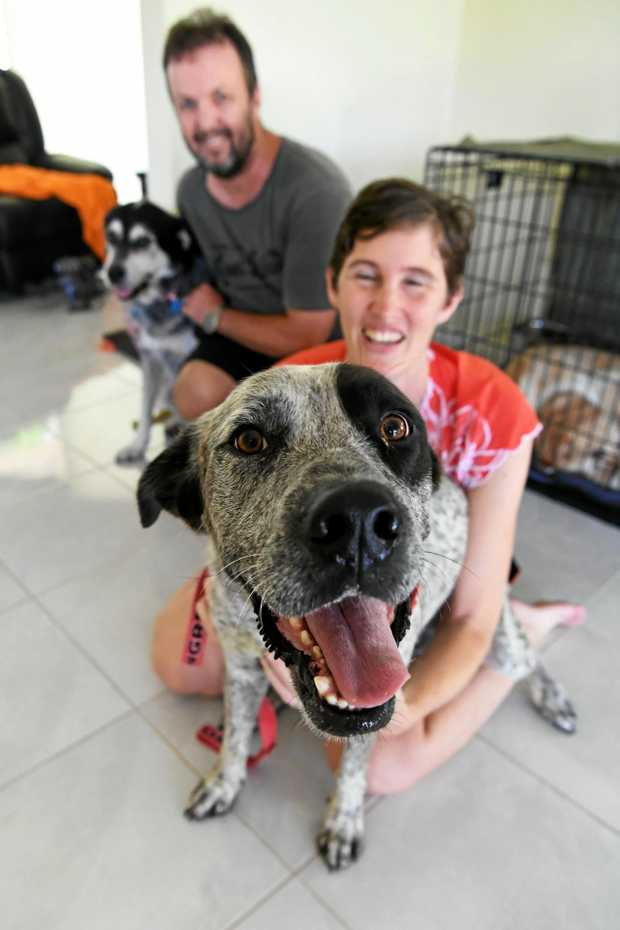 LOOKING FOR A HOME: Hero with his foster parents Bob and Chris Farnham.