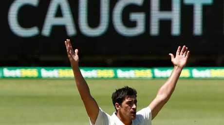 Mitchell Starc appeals to the umpire.