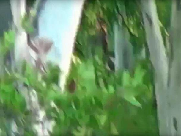 Screenshots from a video of an alleged Yowie sighting in Queensland.