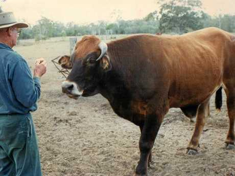 Photo: Doug Dilger was attacked in his Childers home. This is Doug about 10 years ago with cattle.