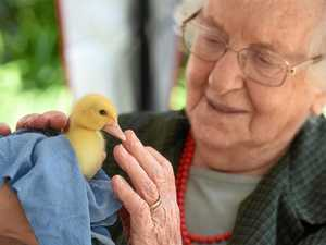 PHOTOS: Baby animals cause a fuss at aged care home