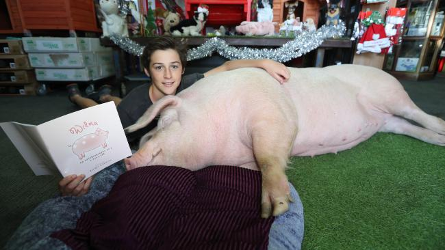 Wilma the pet shop pig now has a children's book written about her and her life, illustrated and written by her human family members. Photo by Richard Gosling