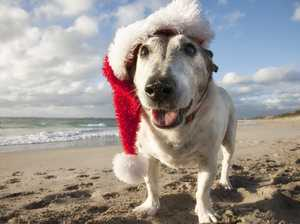 12 Strays of Christmas: Pets up for adoption