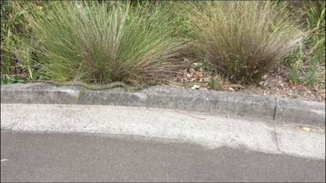 A diamond python near the playground. Picture: Supplied