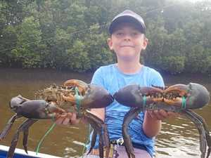 How to secure a good feed of crabs