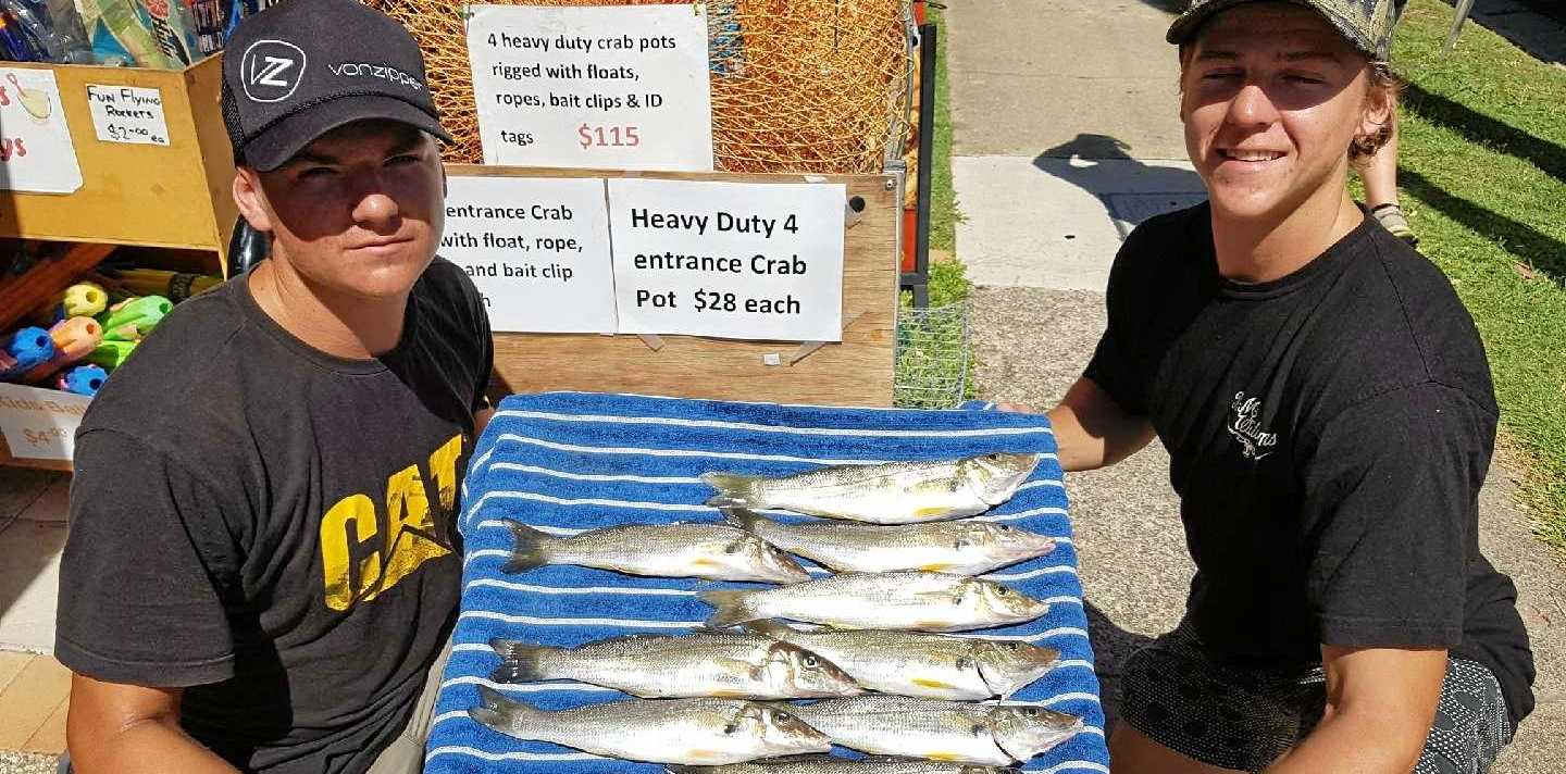 FISHERMEN: Cameron and Daniel Vogler had a good session cleaning up with a feed of elbow slapper whiting and releasing cod and mangrove jack in the lower Maroochy River.