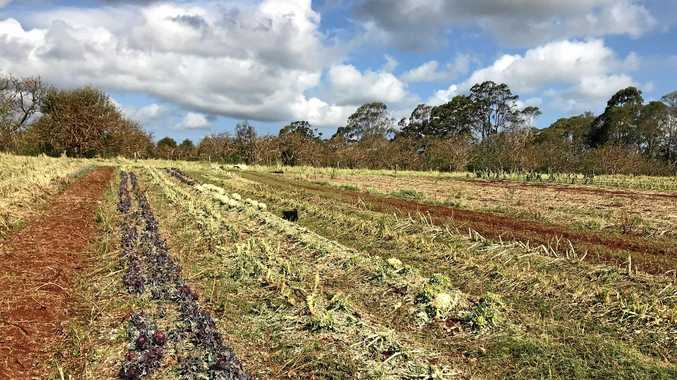 Red Earth Organics lost more than $200,000 worth of crops in the hail storm in November.