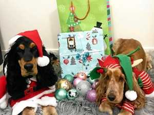 Instafamous dogs in Christmas outfits: There's nothing cuter