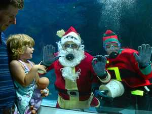 GALLERY: Fish-mas treat for Sea Life goers