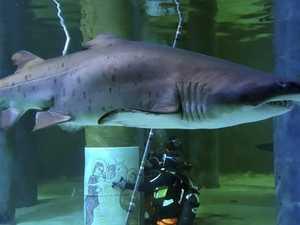 Holy aquarium! Shark gets in on nativity scene