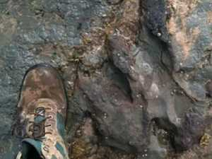 Dino footprint damage 'callous'