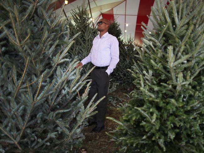 Shopping for a Christmas tree in Miami, Florida. In the United States, it's a billion-dollar industry. Picture: AFP