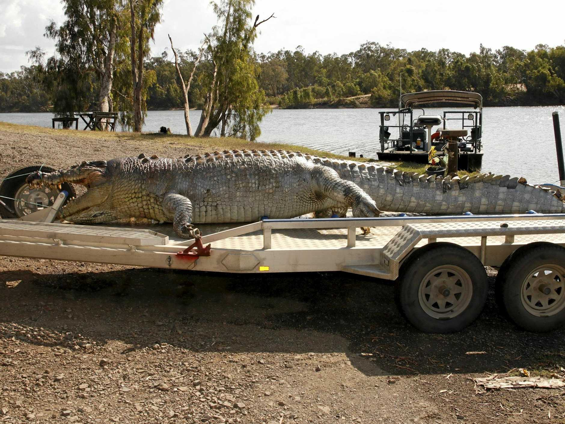 Police and officers from the Department of Environment and Heritage Protection are  investigating the shooting of an iconic 5.2m crocodile near Etna Creek north of Rockhampton.