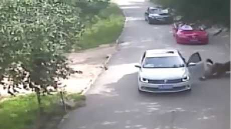 The animal then drags her off as her parents run after her. Picture: CCTV/Supplied