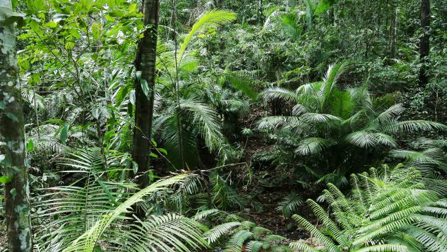 The Daintree Rainforest is the world's oldest and could be home to new tourism ventures.