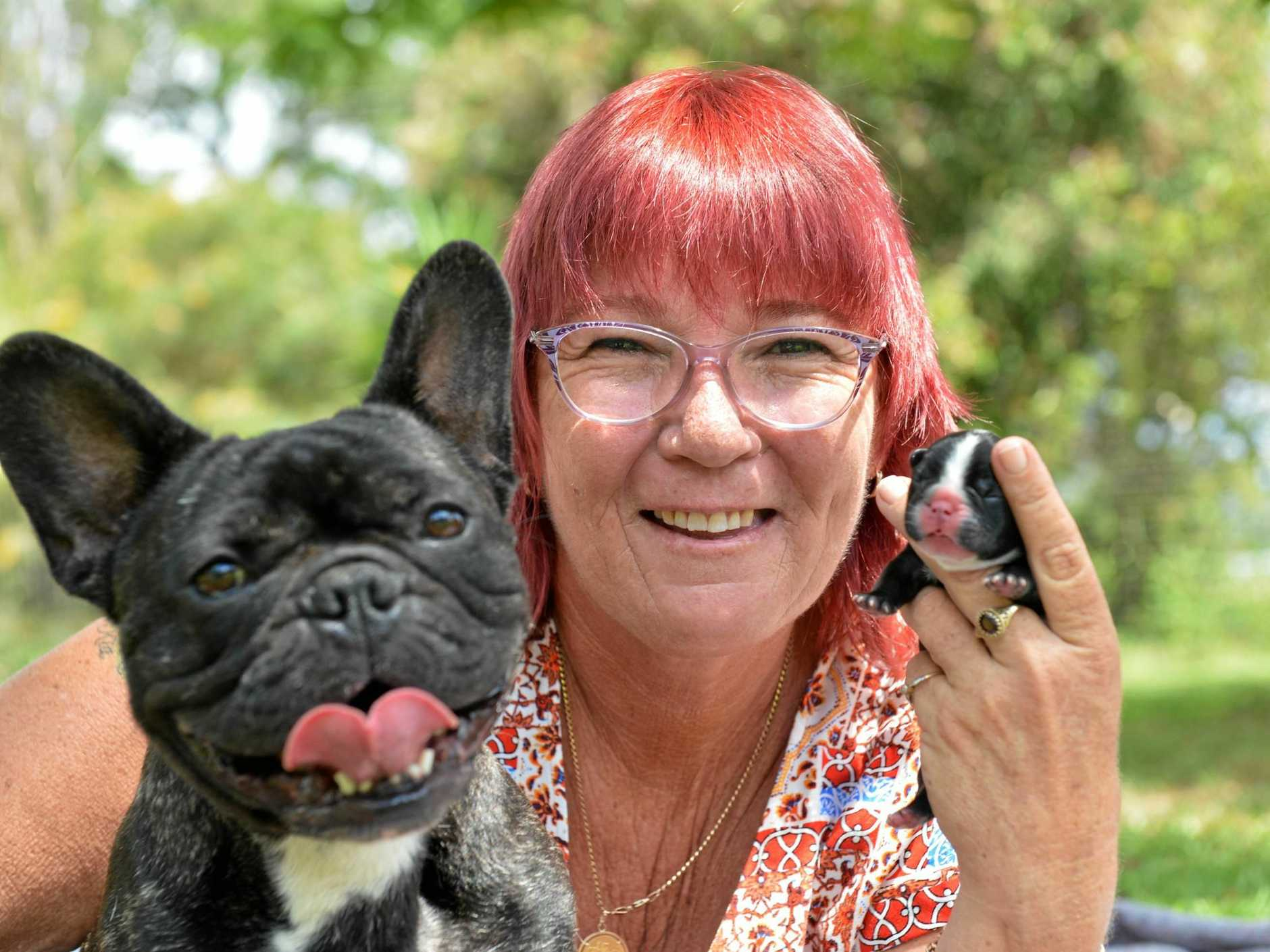 Its A Christmas Miracle.It S A Christmas Puppy Miracle Sunshine Coast Daily