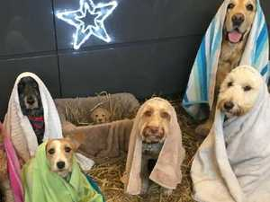 The best nativity scene you'll ever see