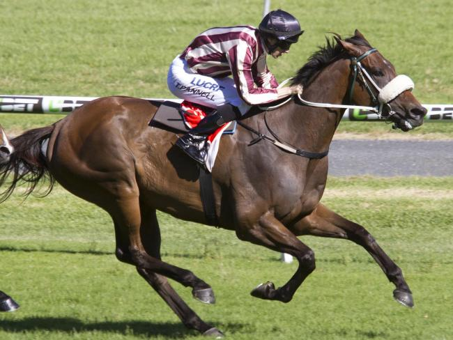 Steel Frost will start in the $1 million Goodwood at Morphettville. Picture: Atkins Photography