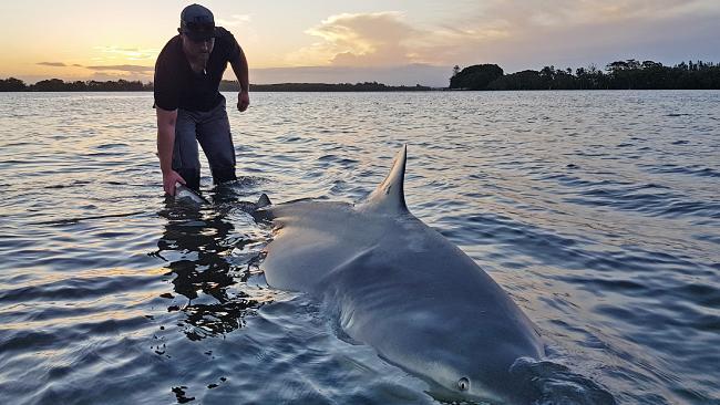 Adam Maddalena with the massive shark. Picture: Yep, I'm on Fishing