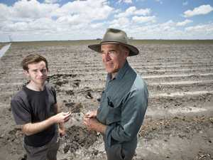 Darling Downs farmers watch as crops destroyed